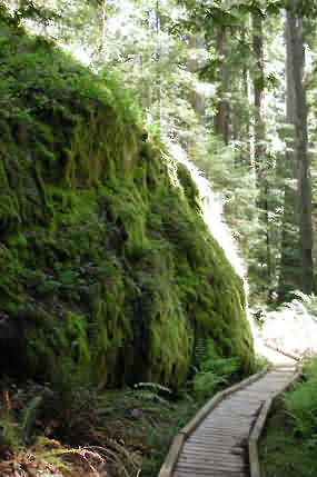 Montgomery Woods, Redwood State Park, mossy rock